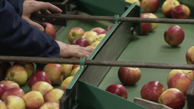 a factory worker checks apples on a conveyor belt at an apple packing factory in england. - manufacturing occupation stock videos & royalty-free footage