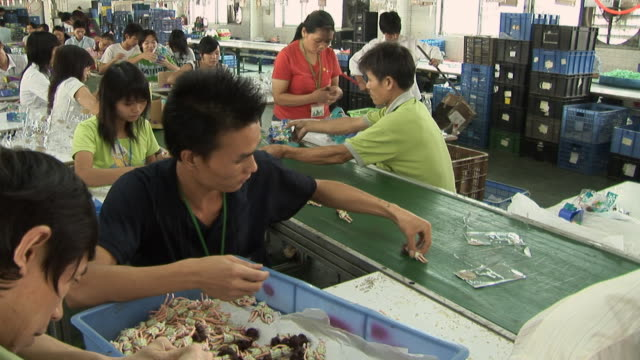 CU Factory worker placing dolls on conveyor belt/ TU MS Workers in toy factory/ Dongguan, China