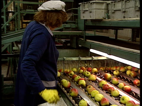 Factory worker removing unacceptable apples from conveyor belt pan right to apples going though machine in factory