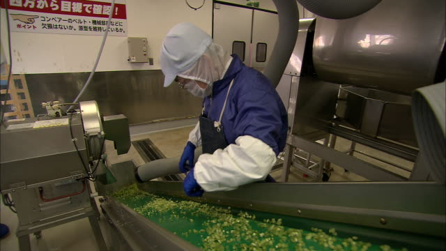 a factory worker sorts wasabi peas that pass by on a conveyor. - wasabi stock videos and b-roll footage