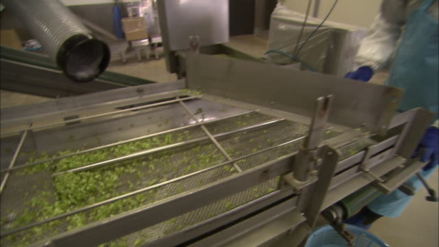 factory workers process wasabi. - wasabi stock videos and b-roll footage