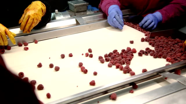 factory workers separating raspberries - quality control stock videos & royalty-free footage