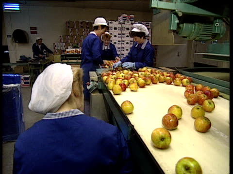factory workers sorting and packing apples coming off conveyor belts - manufacturing occupation stock videos & royalty-free footage