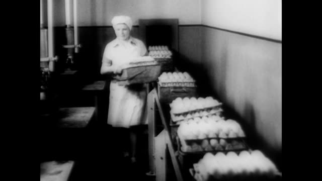/ factory workers stack hundreds of crates of fresh eggs / women carry a tray of eggs to a breaking room where they crack each egg into a sterilized...