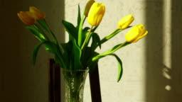 Faded yellow tulip buds raised