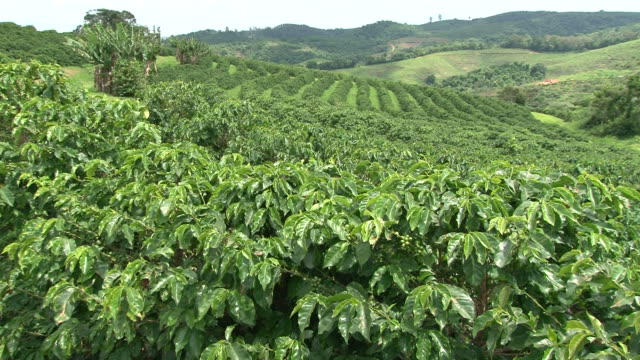 Fairtrade coffee plantation in Brazil