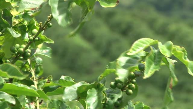 Fairtrade coffee plantation in Brazil