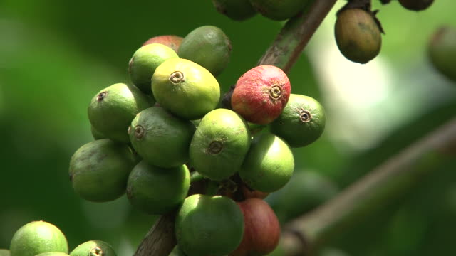 Fairtrade コーヒー農園はブラジル製