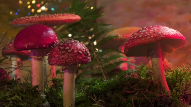 fairytale scene of mushrooms in the forest - fly agaric stock videos and b-roll footage