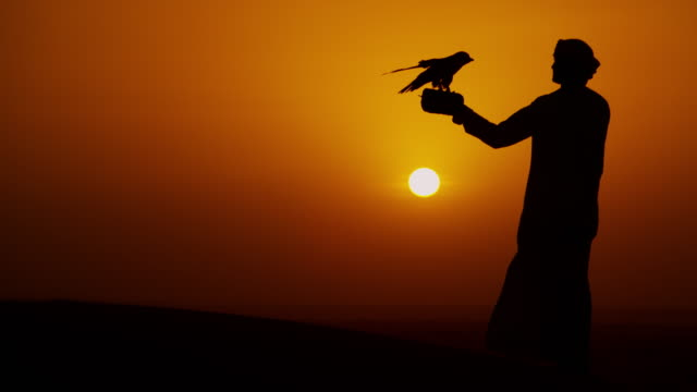 falcon tethered to arabic male owner sunset silhouette - bird hunting stock videos & royalty-free footage