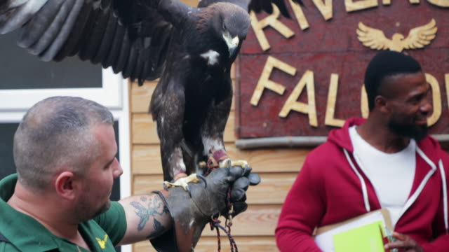 falconer and his golden eagle - golden eagle stock videos & royalty-free footage