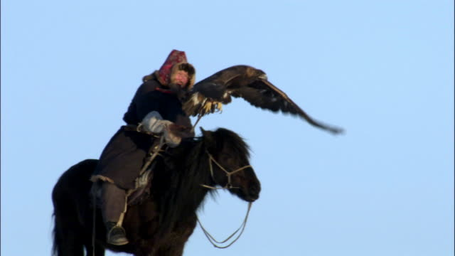 falconer hunts with golden eagle (aquila chrysaetos), jiakuerte, china - einzelner senior stock-videos und b-roll-filmmaterial