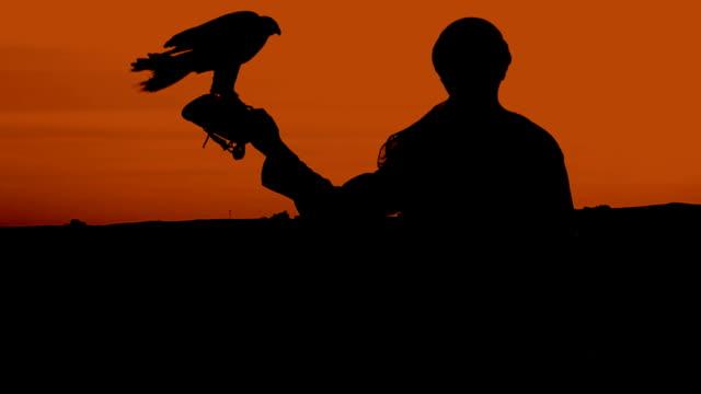 vídeos y material grabado en eventos de stock de falconer silueta contra la puesta de sol - halcón
