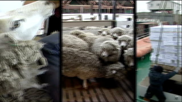 vídeos de stock e filmes b-roll de falklands war 25th anniversary / london tonight special report graphicised wipe sheep shearing/ fishing and oil exploration - tosquiar