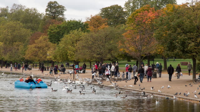 Fall afternoon time lapse of families feeding swans, ducks, and other birds on Serpentine Lake in Hyde Park in Central London