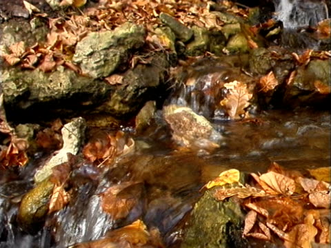 fall autumn water 01 - natural land state stock videos & royalty-free footage