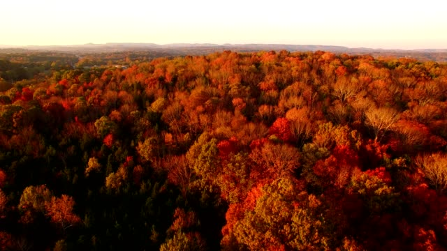 fall colored mountain - autumn leaf color stock videos and b-roll footage