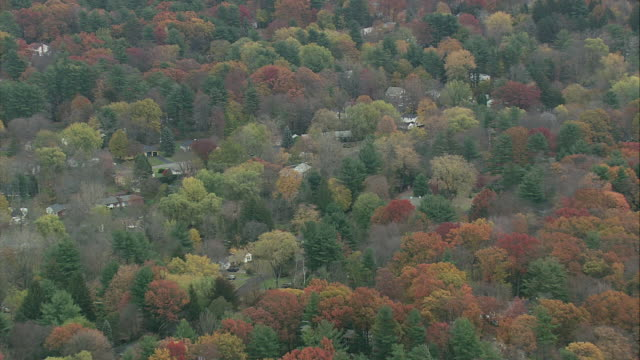 aerial fall colored treetops along mohawk valley / albany, new york, united states - albany new york state stock videos & royalty-free footage