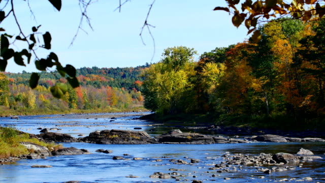 fall colors along river - autumn stock videos & royalty-free footage