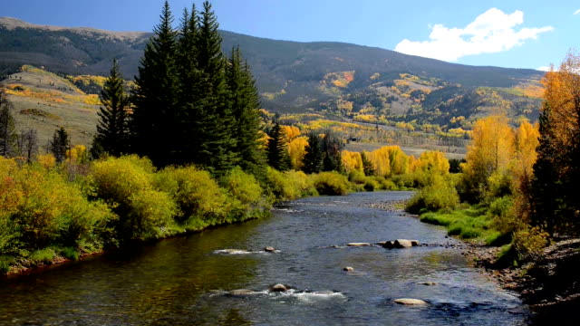 fall colors along the blue river in summit county, colorado - cottonwood tree stock videos and b-roll footage