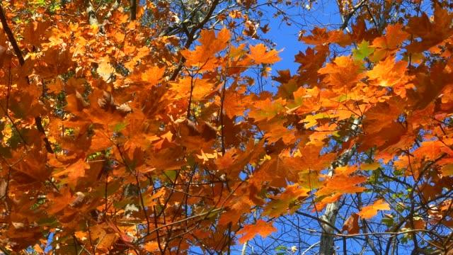 fall colors arkansas - アーカンソー州点の映像素材/bロール