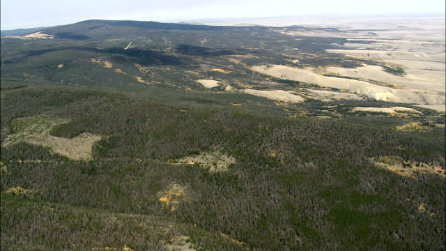 fall colors in medicine bow-routt national forest  - aerial view - wyoming, albany county, united states - national forest stock videos and b-roll footage