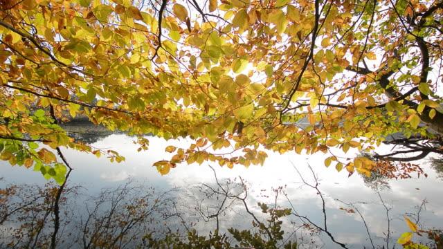 stockvideo's en b-roll-footage met fall colors lake - meer dan 40 seconden