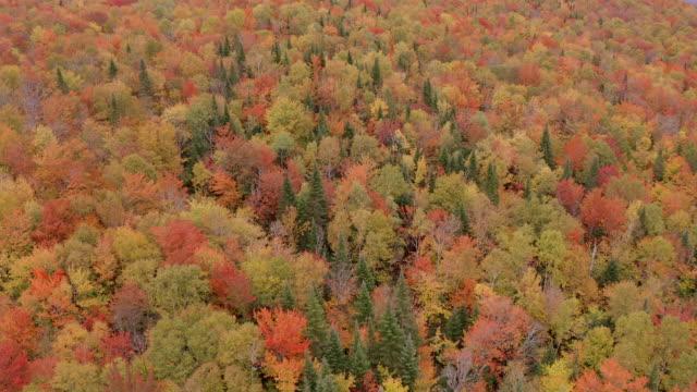 秋の紅葉シーズン、ケベック、カナダの森の空中の秋の色 - 色が変わる点の映像素材/bロール