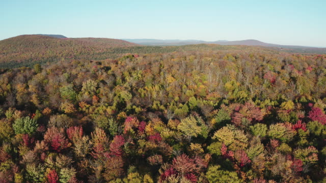 aerial fall colors of a forest in autumn season, quebec, canada - national park stock videos & royalty-free footage