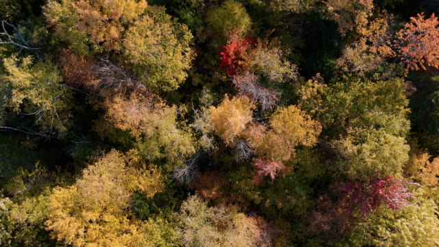 aerial fall colors of a forest in autumn season, quebec, canada - forest stock videos & royalty-free footage