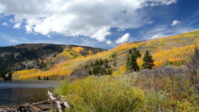fall foliage at a mountain lake in colorado - beaver dam stock videos and b-roll footage