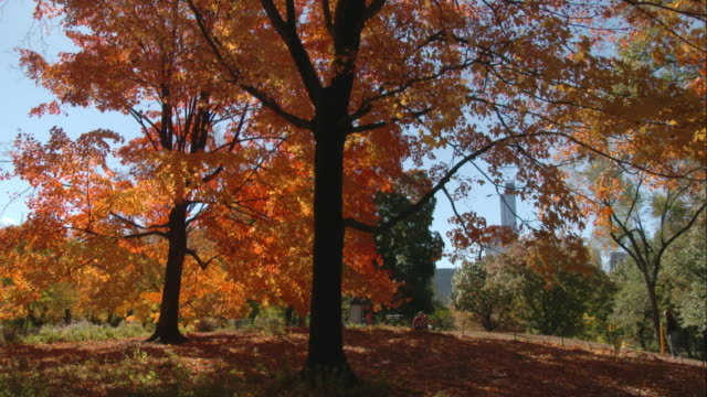 fall foliage in central park on a sunny fall day. - 色が変わる点の映像素材/bロール