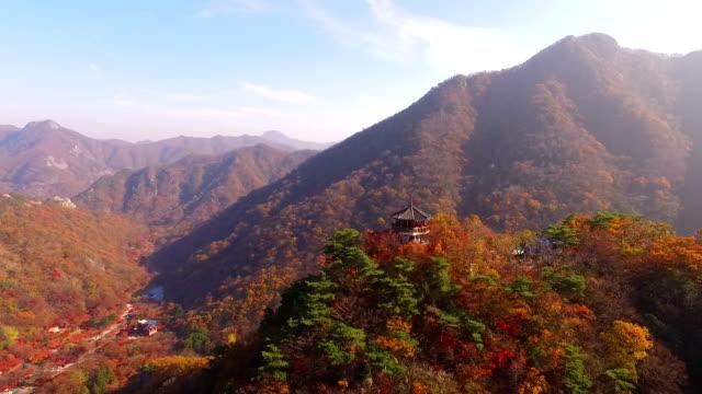 vídeos y material grabado en eventos de stock de fall foliage of maple trees in naejangsan mountain / jeongeup-si, jeollabuk-do, south korea - árbol de hoja caduca