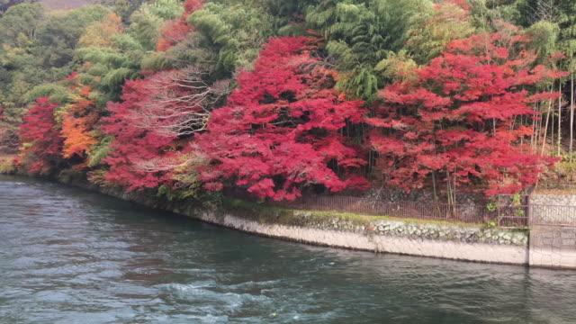 公園の紅葉 foliage.autumn - 硬木の木点の映像素材/bロール