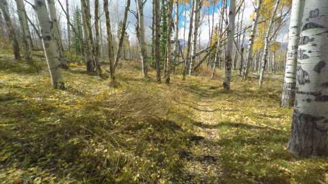 fall hike in the rocky mountains - aspen tree stock videos & royalty-free footage