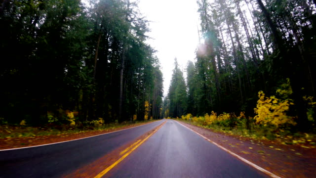 fall in pacific northwest: driving - pacific northwest usa stock videos & royalty-free footage