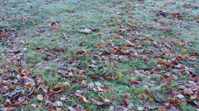 fall leaf on grass ground in park - frost stock videos & royalty-free footage