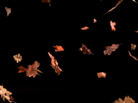 vídeos de stock, filmes e b-roll de fall leaves descending - sparklondon