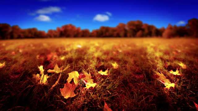 fall nature - saturated color stock videos and b-roll footage