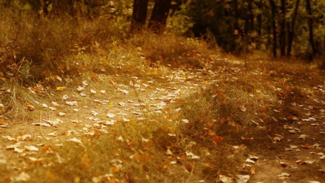 l'autunno - dissolvenza in apertura video stock e b–roll