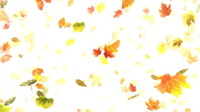 Outono/folhas de outono (branco)-Loop