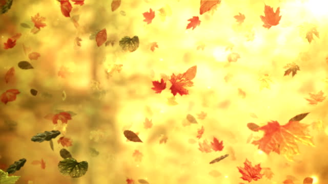 Fall/Autumn leaves (forest background) - Loop