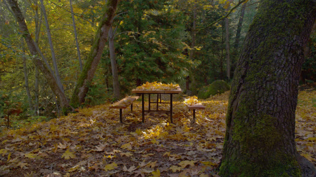 vídeos de stock e filmes b-roll de fallen autumn leaves litter a picnic table in lithia park, oregon. - mesa de piquenique