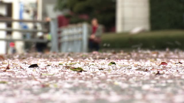 fallen cherry petals blown up by wind, oita, japan - oita city stock videos & royalty-free footage