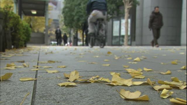 Fallen ginkgo leaves cover a city sidewalk near Marunouchi district in Tokyo, Japan.