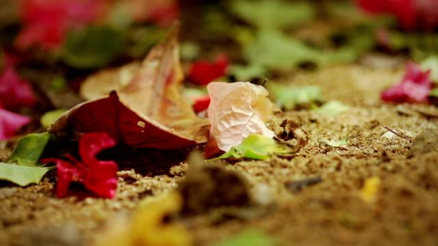 vídeos de stock, filmes e b-roll de caído folhas e flores - arbusto tropical