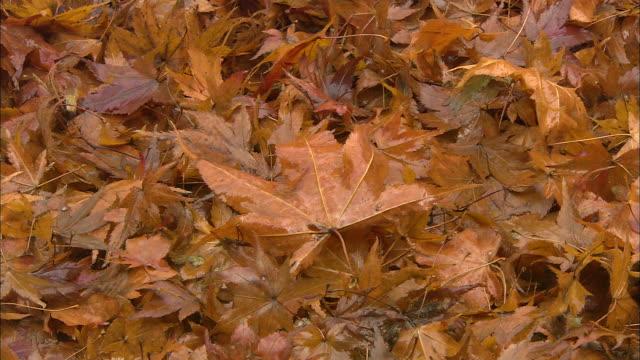 Fallen leaves carpet the ground.