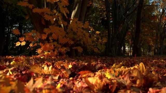fallen leaves  dead leaf  ground  makomanai park - heap stock videos & royalty-free footage