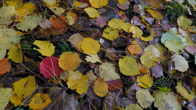 Fallen leaves, La Jacetania, Huesca, Aragon, Spain, Europe