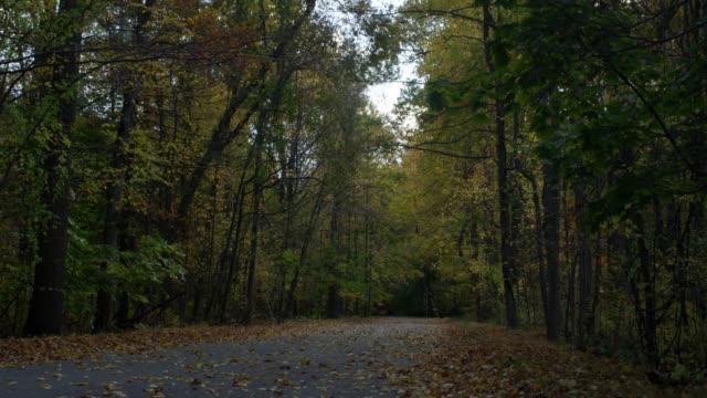 W/S Fallen leaves on road in autumn